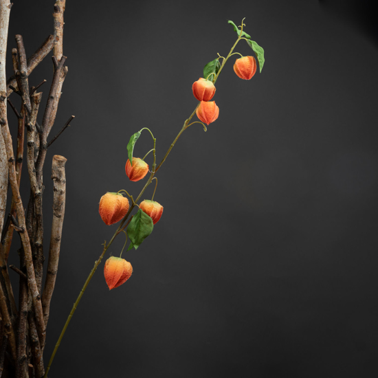 Picture of 4 Pack - Chinese Lantern