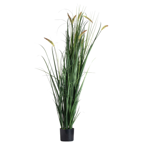 Picture of Large Potted Meadow Grass