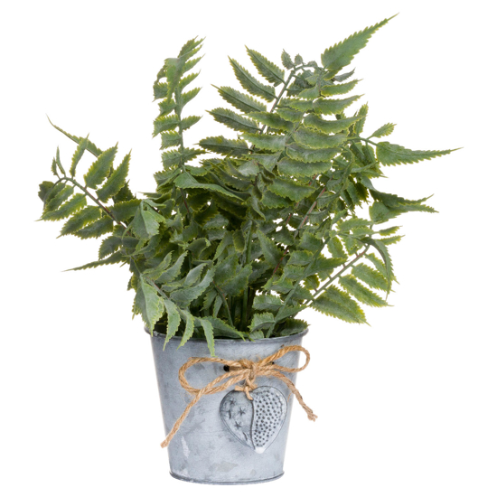 Picture of Sage Fern In A Tin Pot