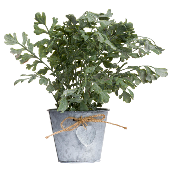 Picture of Herbs In Tin Pot