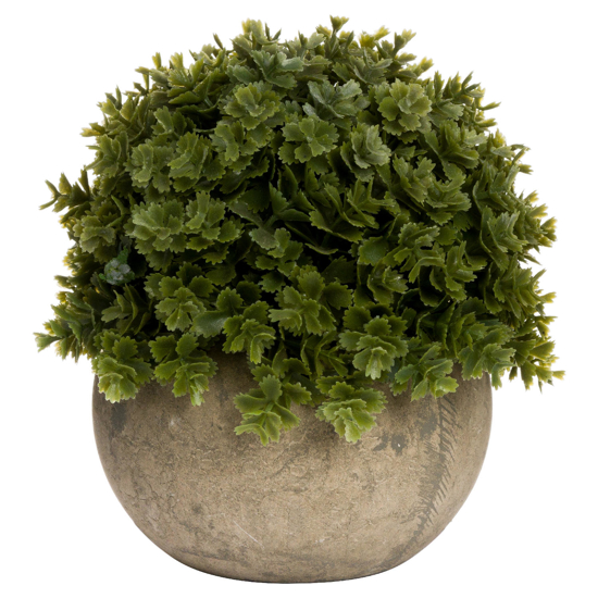 Picture of Miniature Hebe Veronica In Pot